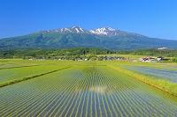 山形県 鳥海山と水田