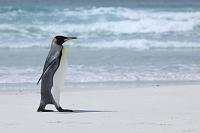 ボランティアポイント キングペンギン