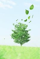 木と舞い散る青葉