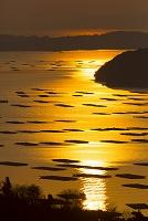 岡山県 朝の瀬戸内海とかきいかだ