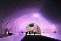 滋賀県 MIHO MUSEUM 桜並木の色彩を投影するトンネル