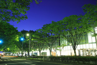 東京 表参道の夜景