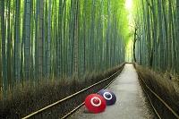 日本 京都府 竹林の小径と蛇の目傘