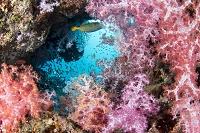 タイ サンゴ礁のイメージ