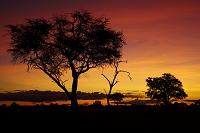 ジンバブエ ワンゲ国立公園 夕方