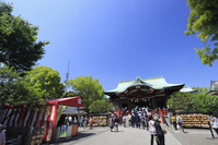 東京都 亀戸天神の藤まつり