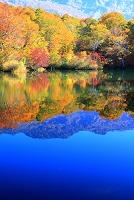 長野県 小谷村 鎌池の紅葉