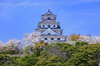 佐賀県 サクラ咲く満島山と唐津城天守閣