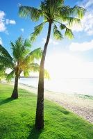 グアム タモンビーチと椰子の木
