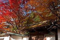 奈良県 秋の室生寺 紅葉