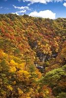 宮城県 紅葉の鳴子峡