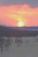 北海道 釧路湿原の日の出 ヨシとハンノキ