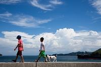 愛媛県 伯方島 海辺の日本人の子供と犬