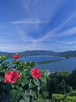 京都府 傘松公園よりハイビスカスと天橋立
