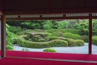 滋賀県 サツキ咲く大池寺