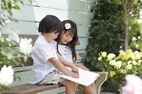 バラの咲く庭で本を読む女の子と男の子