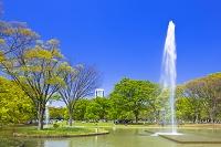 東京都 新緑の代々木公園