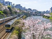 東京都 桜 電車