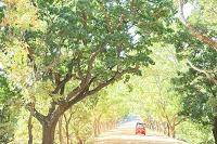 スリランカ シーギリヤ 一本の道とオート三輪