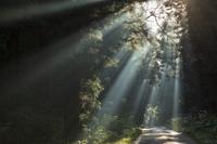 新潟県 杉並木の光芒