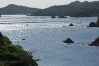 英虞湾の筏