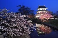 北海道 松前城と夜桜