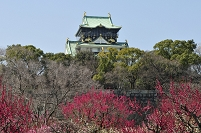 大阪城公園 梅林より天守閣を望む