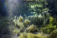 熊本県 白川水源 湧き水(噴水)