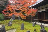 京都府 光明院 茶室から見る波心庭の紅葉と本堂
