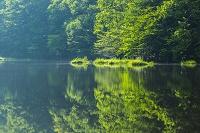 山梨県 さわら池と森