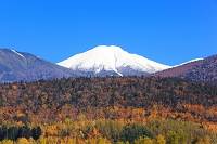 北海道 富良野市 冠雪の上ホロカメットク山と裾野に広がる山林