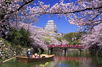 兵庫県 姫路城と桜