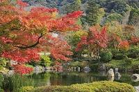 京都府 円山公園 紅葉とひょうたん池