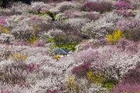 三重県 いなべ市農業公園の梅林公園