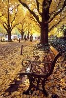 神宮外苑の銀杏並木とベンチ