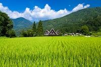 岐阜県 夏の白川郷