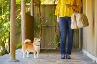 犬連れ旅行