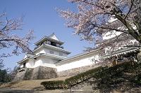新潟県 長岡市郷土資料館と桜