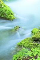 青森県 奥入瀬渓流 阿修羅の流れ