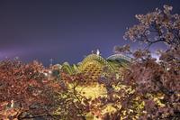 錦帯橋と夜桜