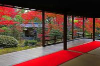 京都府 京都市 秋の大法院 庭園