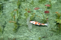 岐阜県 関市 モネの池
