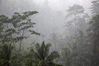 インドネシア共和国 バリ島 ウブドのスコール
