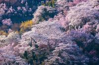福島県 福島市 花見山公園