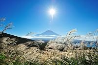 山梨県 三国峠 パノラマ台より富士山 ススキ