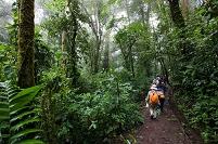 コスタリカ モンテベルデ自然保護区