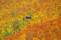 山形県 紅葉の蔵王ロープウェイ山麓線