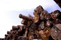 輸入木材のストックヤード風景
