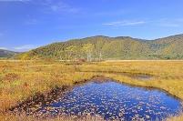 群馬県 尾瀬 中田代の池塘と白樺の黄葉