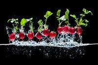 水中より飛び出したラディシュとプチトマト